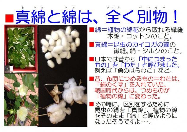 真綿と綿カイコ表